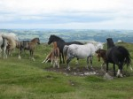 Horses at the top - View to the north