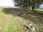 Autumn comes early and Bandit spots sheep
