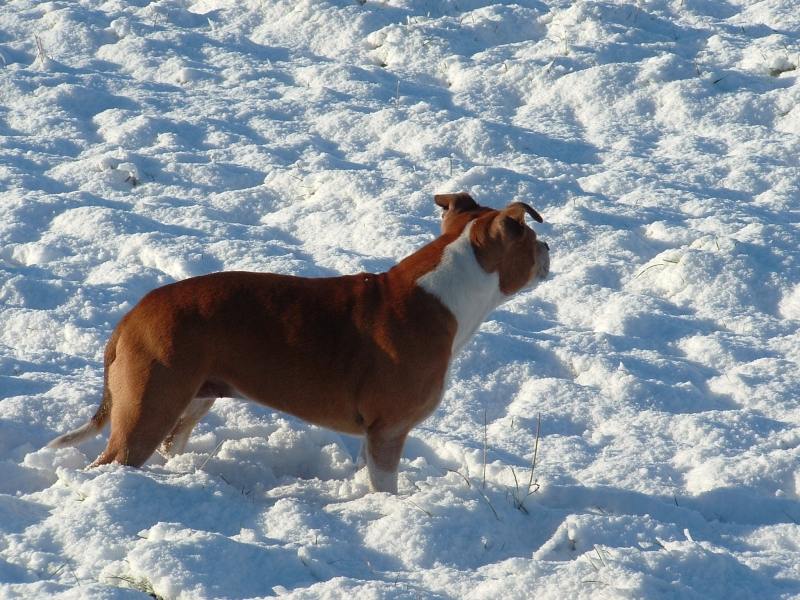 Bonnie in the snow